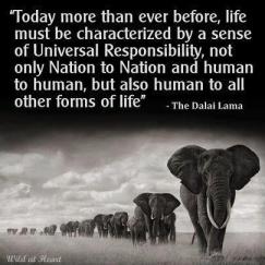 dalai_lama-quote-universal-responsibility-sentient-beings